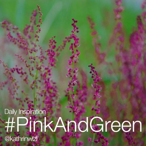 pink and green photos