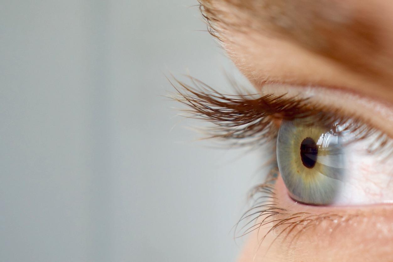 Bird eye close up