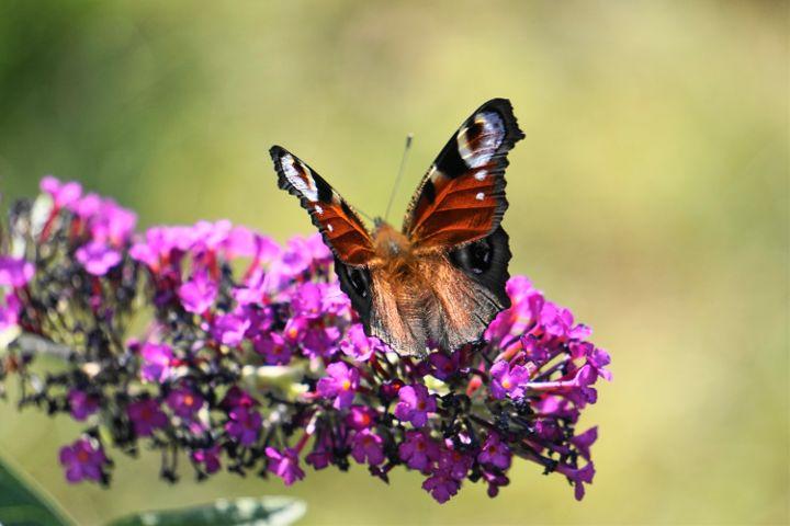 #colorful #flower #nature #photography #petsandanimals #love #summer