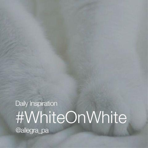 dailyinspirations whiteonwhite