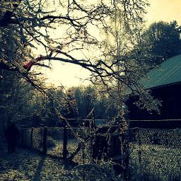 winter forest like dream