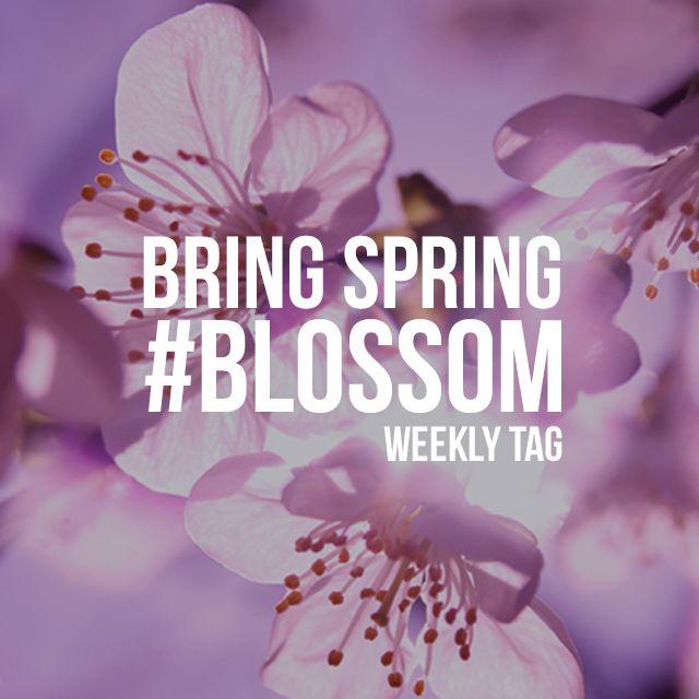 hashtag blossom