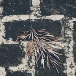 leaf leaflove brick photography nature