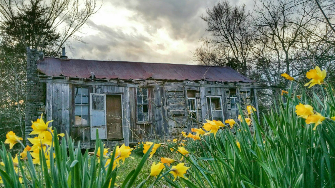 #wapoldvsnew  #oldhomeplace  #daffodils #jonquils #farmhouses #sunset