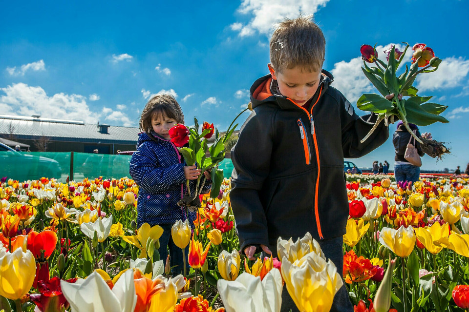 My two #sweet #kids picking #tulips. Gives a #happy #spring feeling. #flower #flowers #denhelder