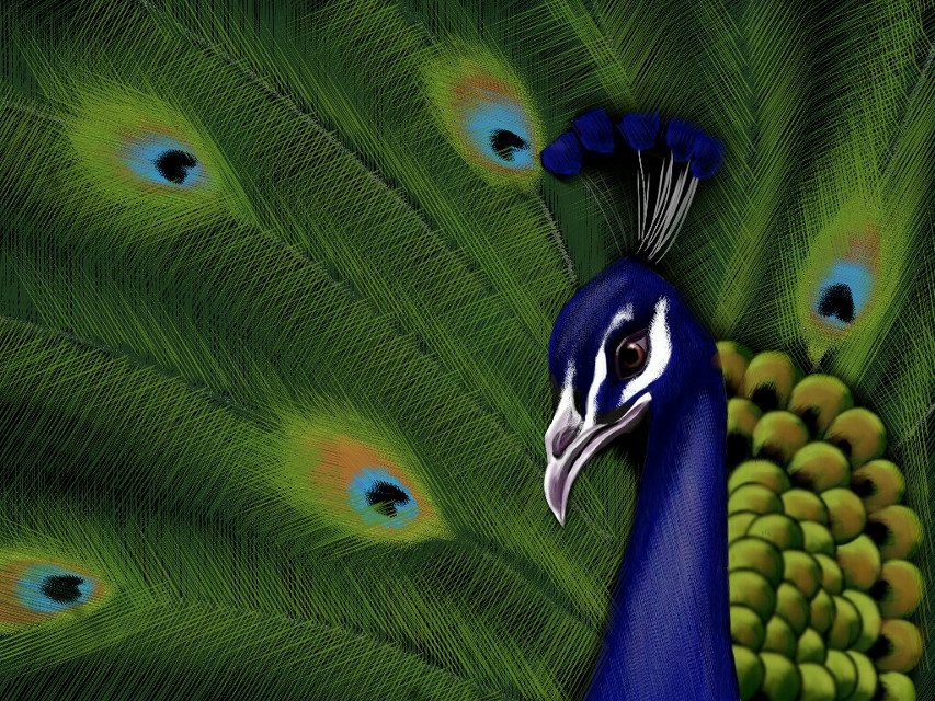 #DCpeacock  #colorful  #emotions #nature #art #drawing  #artstic #abstract  Quick tips coming soon... really tired after drawing this(with my index finger)!! Plz do VOTE for me!!