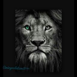 hdr photography lion colorchanger