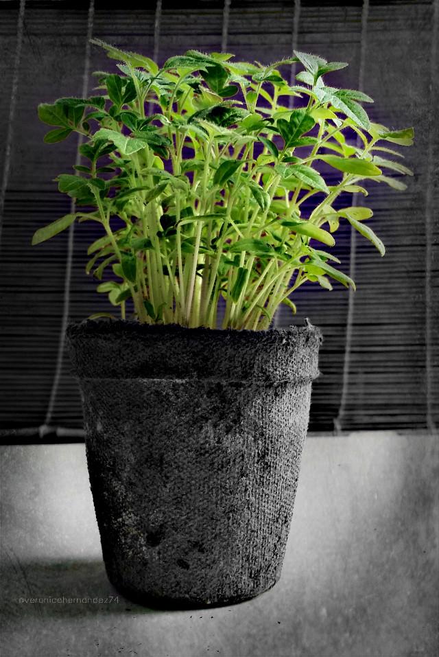 #limegreen #plants