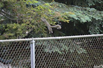 squirrel nature action