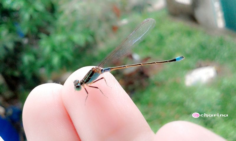 dragonfly hand emotions love blue