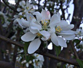 nature flower spring white interesting