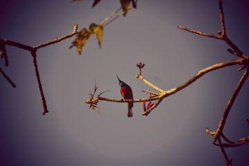 photography nature birds freetoedit