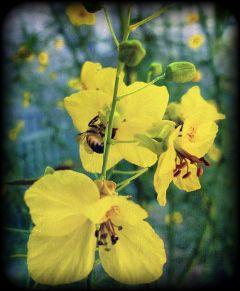 bee summer flower nature emotions
