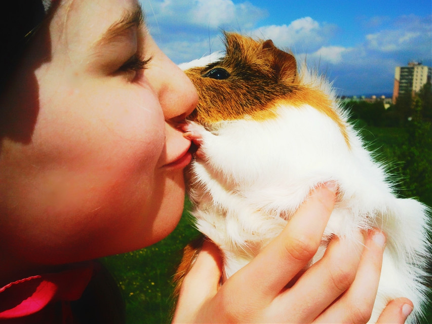My favorite guinea pig also my faithful girlfriends  #spring #colorful #cute #emotions