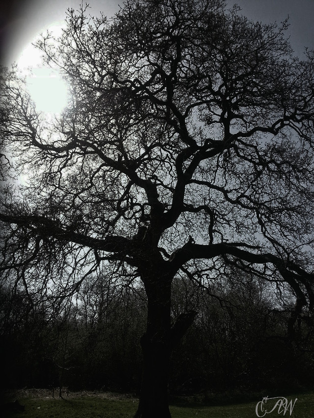 #Stark MY FAVOURITE TREE IN THE REGIONAL PARK BALLINCOLLIG CO CORK IRELAND    #photography  #nature