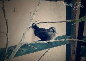cute nature photography petsandanimals