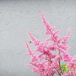 vibrant bee pink flower pinkandgrey