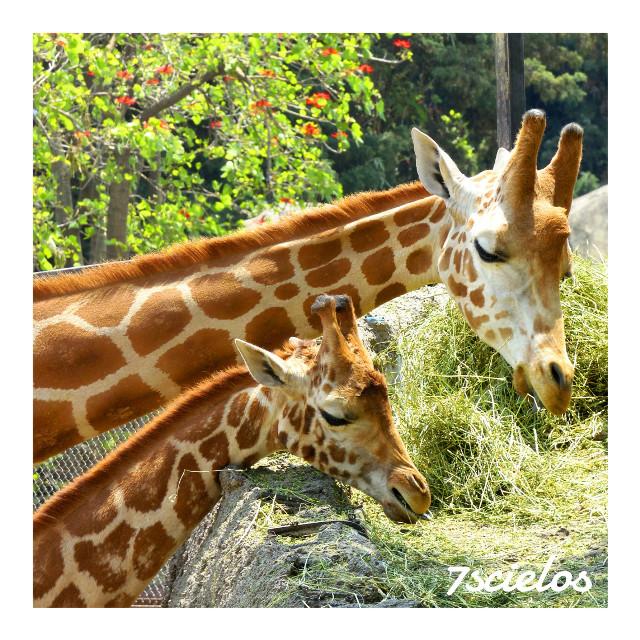 Siempre he admirado a estos bellos animales...