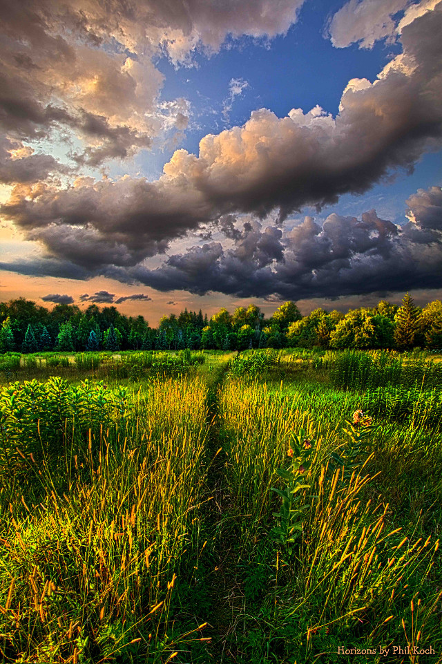 Horizons by Phil Koch  #beautiful #wisconsin #relaxation #woods #sun #light #canon #Flowers #path #forest #country #horizons #Wisconsin #naturephotography #earthboundshots #sunset #sunrise #weather #beauty #landscapephotography #peace #hope #travel #summer #photography #nature #love #hdr #flower #colorful #emotions