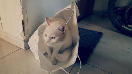 bag white israel tlv cat