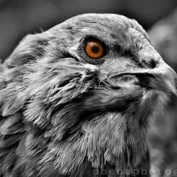 eye blackandwhite intense colorsplash petsandanimals