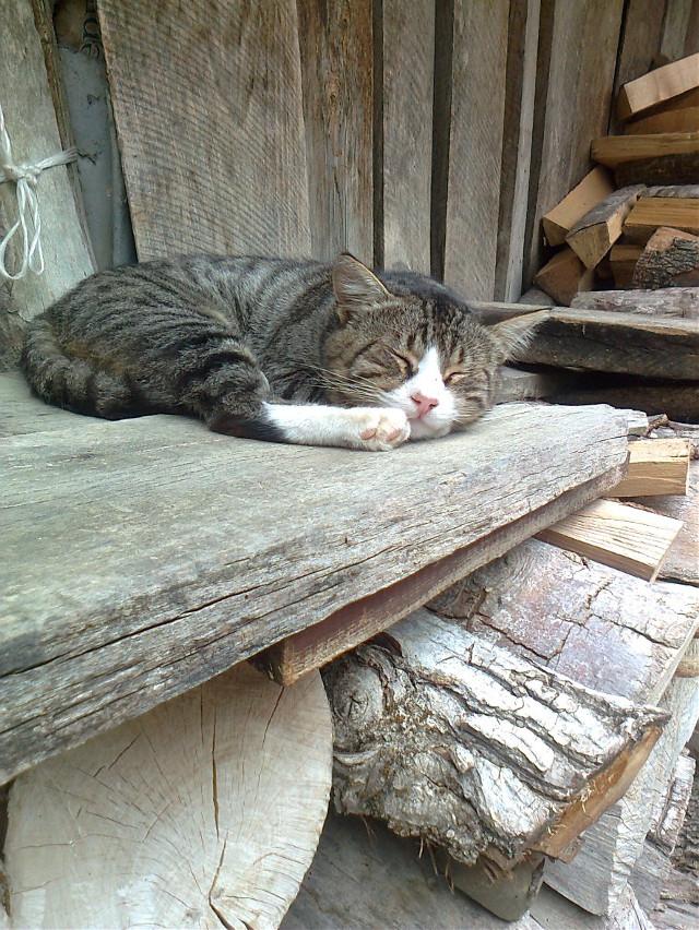 #cat #wppanimals #pccutepets #cutepets #pccats #cats