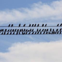 birds silhouette interesting art nature