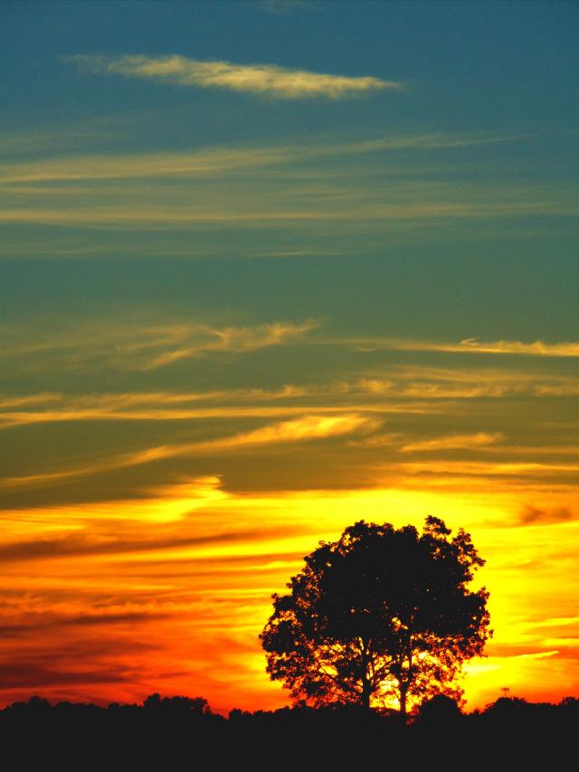 Rainbow sunset silhouette 2 #photography #nature #landscape #sunset #freetoedit #tree #colorful #backlight