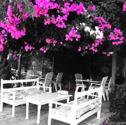 colorsplash blackandwhite nature photography emotions