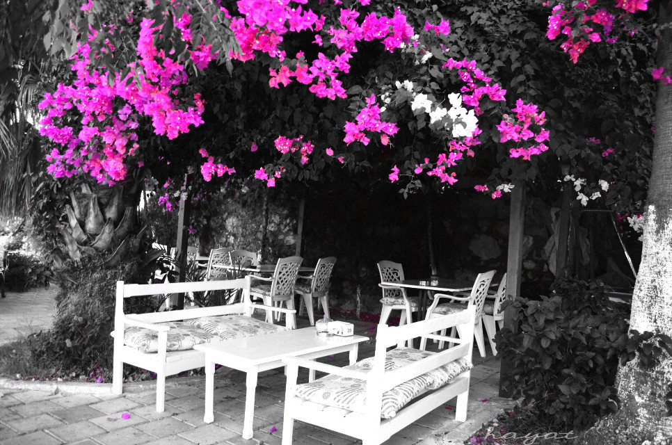 The most beautiful place of cafe but empty 😕 #colorsplash #blackandwhite #nature #photography #emotions #turkey #fethiye #pink #cafe #flower #bougainvilleas