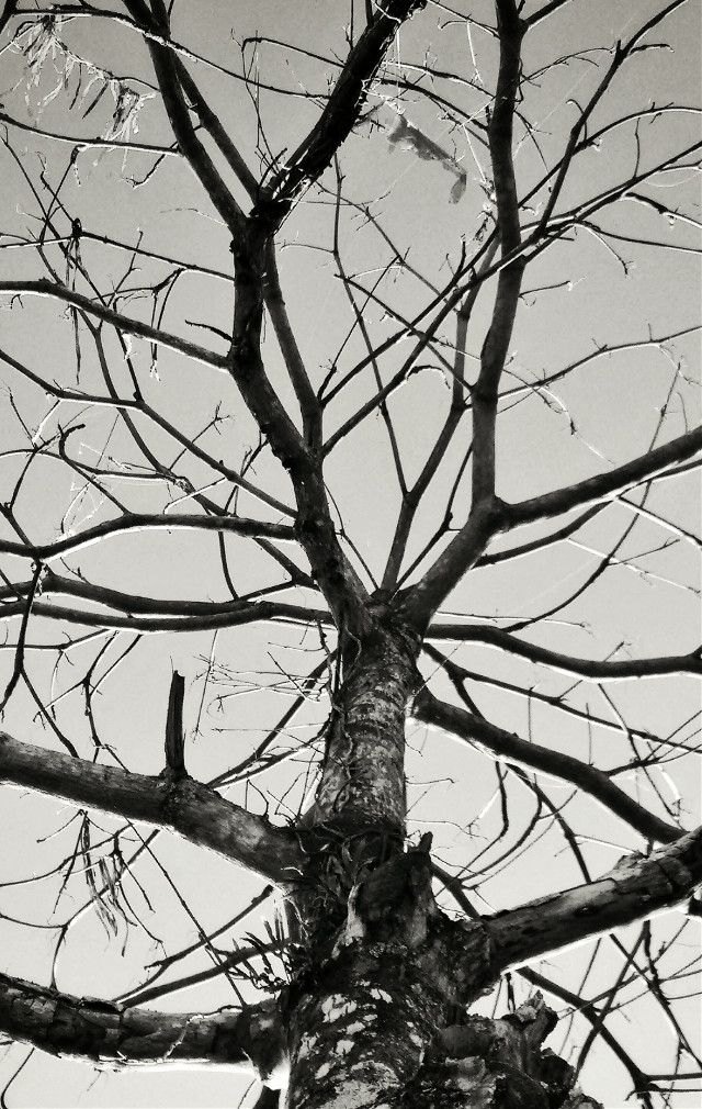 #blackandwhite #photography #emotions #blackandwhitephotography #fotografothiagoprado #bnw_globe #bnw #fotometrandobrasil #bnw_society #bnw_life #bw #princely_bw #collection_bw #conceptualphotography #landscape #love #nature #tree #art
