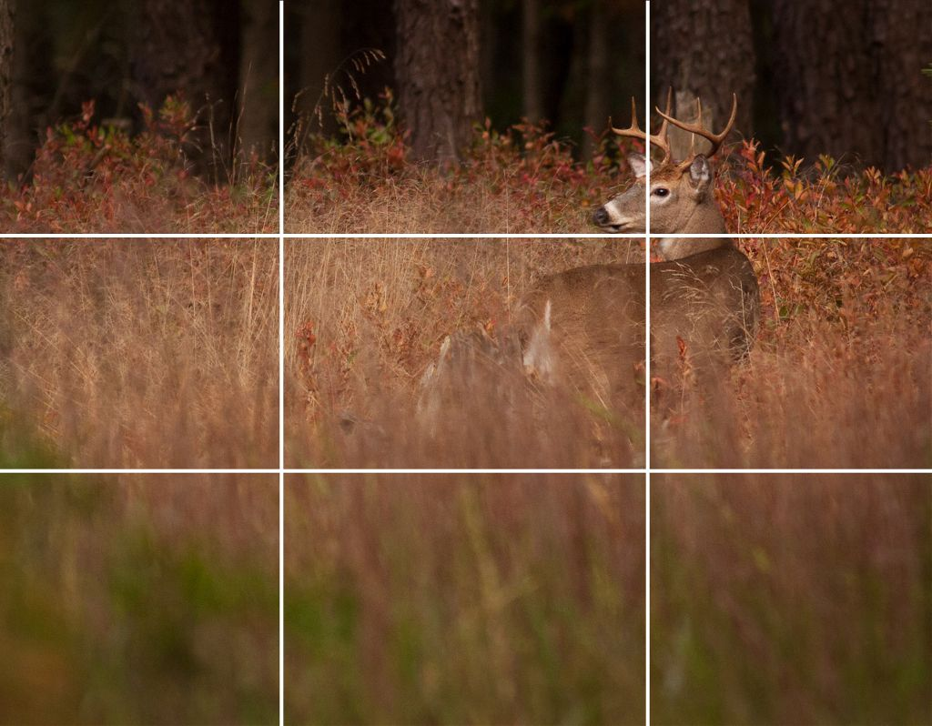 How to use the rule of thirds in photography