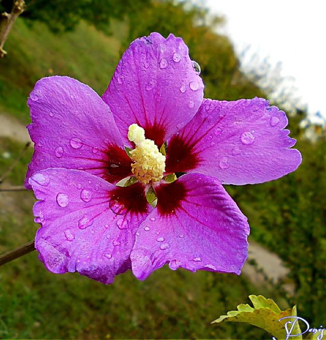 My friend neri0201 #flower#pink#emotion#photography#